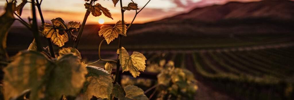 Bg - Quote - home - Cape & Grapes